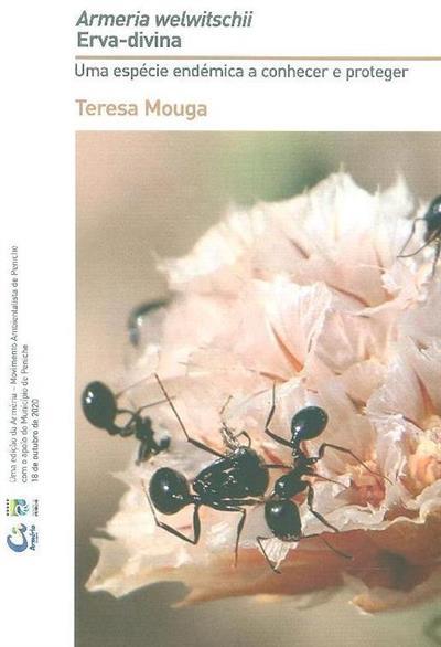 Armeria welwittschii erva-divina (Teresa Mouga)